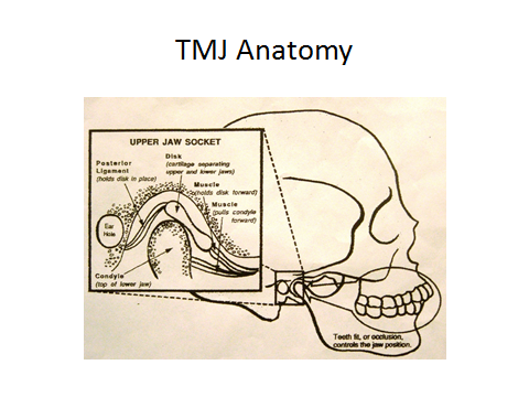 Diagram of TMJ bone anatomy