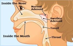 inside the nose
