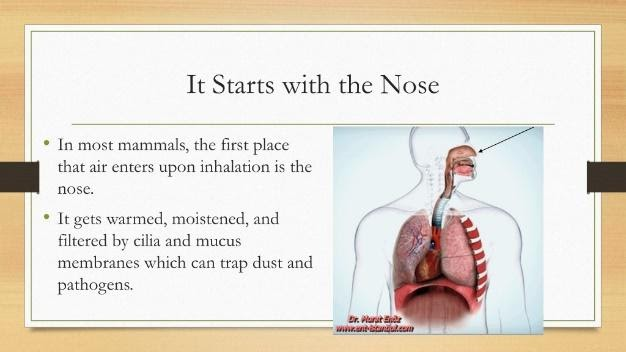 starts with the nose