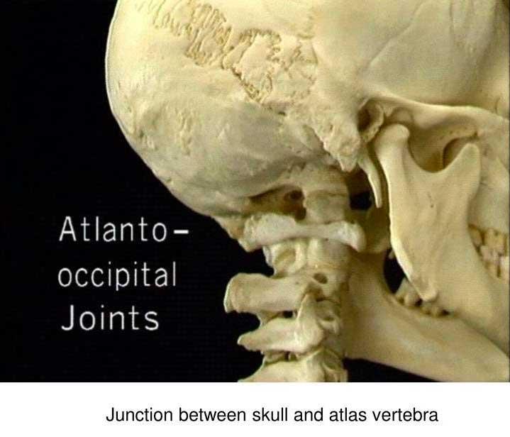atlanto-occipital-joints_