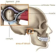 ligament jaw