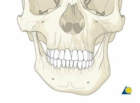 lower jaw assymetry
